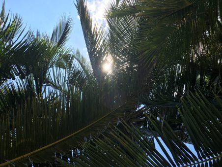 На пляже в тени пальм