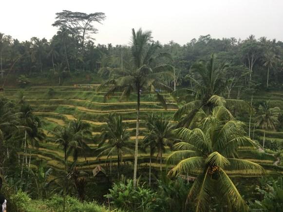 Рисовые террасы Tegalalang