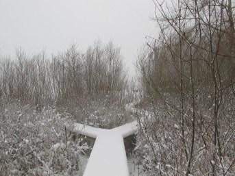 Pad door griend in winter