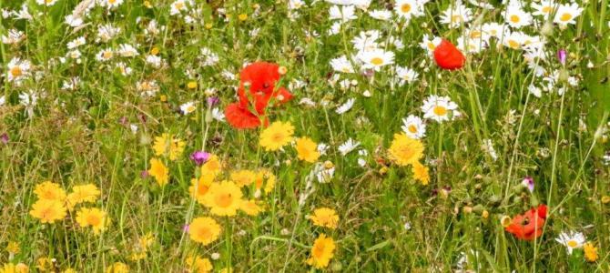 Hervatting Rondleidingen met gids in de Natuurtuin: zondag 28 juni weer de eerste maandelijkse rondleiding en woensdag 15 juli een Zomeravondwandeling