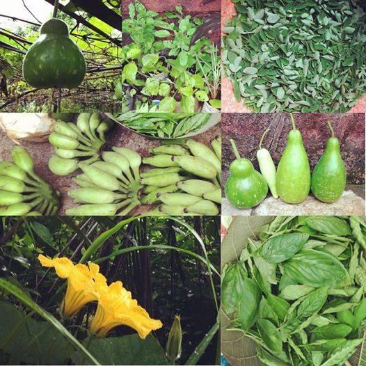 #harvest #freshproduce #biodynamic #vrindavanfarm #farm