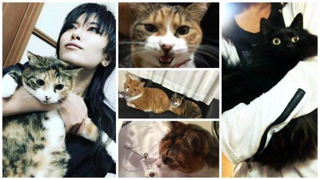 DISACODE Akira cat