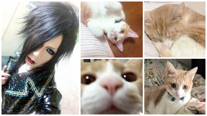 THE EGOIST Shou cat