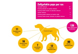 multi-funcionele hond