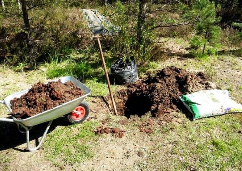 Подготовка посадочной ямы для саженца
