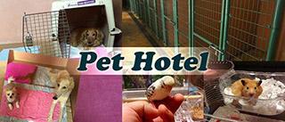 福岡ペットのペットホテル・一時預かり