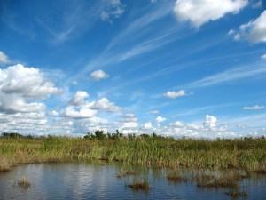 Everglades Landscape-2