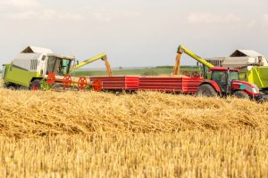 wheat-grains-4