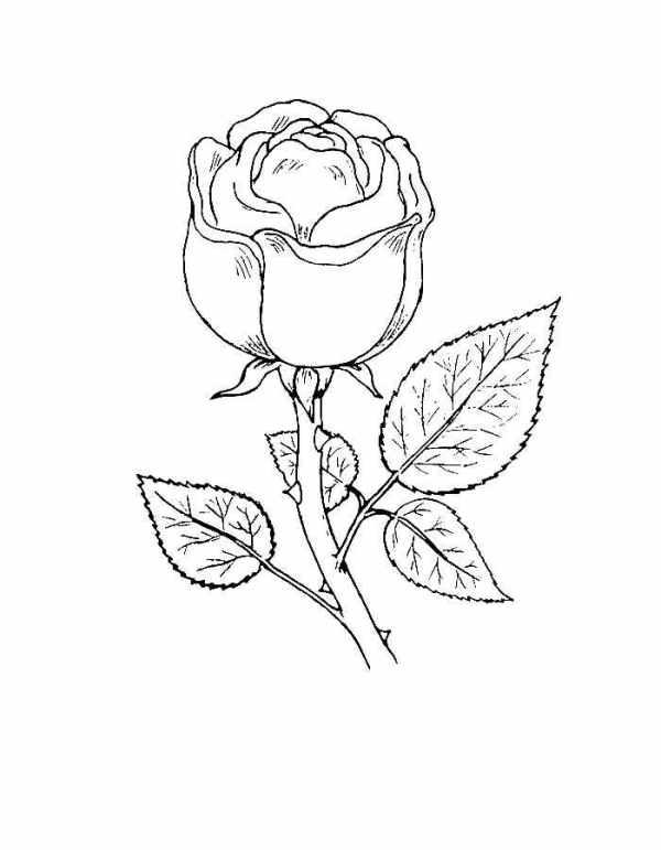 Цветок роза раскраска для детей осенние Рисунки детям