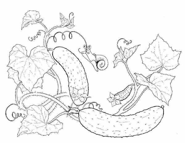 Раскраска огурец. Распечатать картинки с овощами.