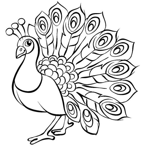 Раскраска жар птица. Распечатать картинки для детей бесплатно.