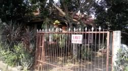 sudut rindang sebuah rumah lama di Depok