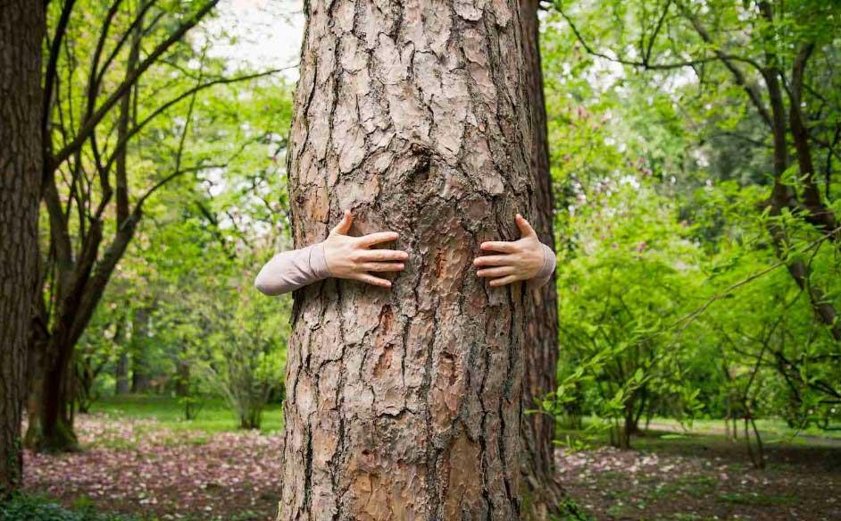 Прегърнете едно дърво