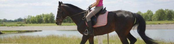 Ногавки для лошади: виды, как выбрать и одевать, фото и видео