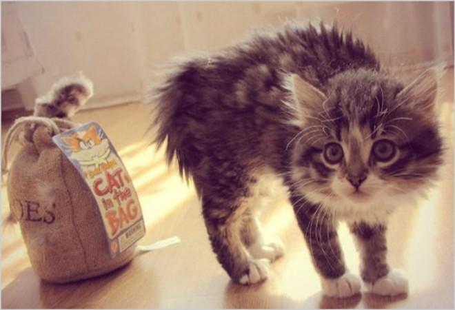 Выживают коты после отека легких какие последствия. Отек легких у кошек: причины, симптомы и лечение