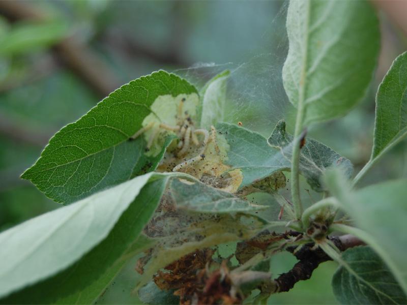 Борьба с вредителями яблони весной самостоятельно на даче