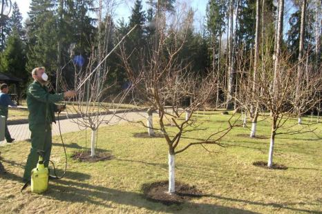 Чем обработать деревья осенью