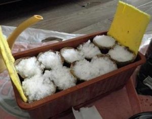сеять землянику на снег