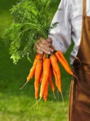 Морковь в зиму