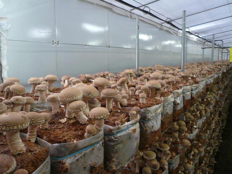 Способы выращивания грибов в домашних условиях
