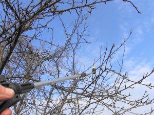 Подготовка сада к обработке деревьев мочевиной