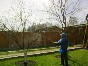 Подбор разбразгивателей для обработки деревьев весной мочевиной