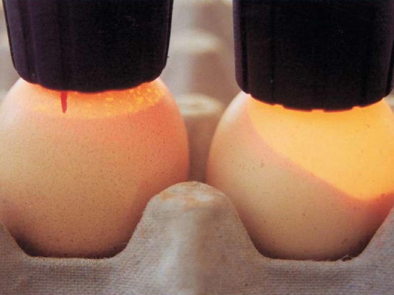 Овоскопирование куриных яиц самодельным овоскопом