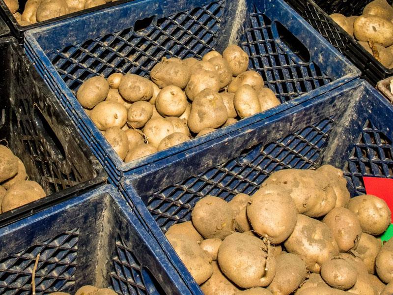 Способы хранения картофеля в помещении