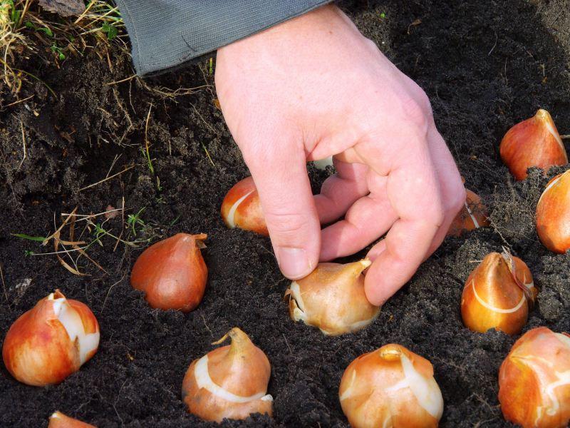 Какие цветы можно посадить семенами под зиму и как правильно сажать