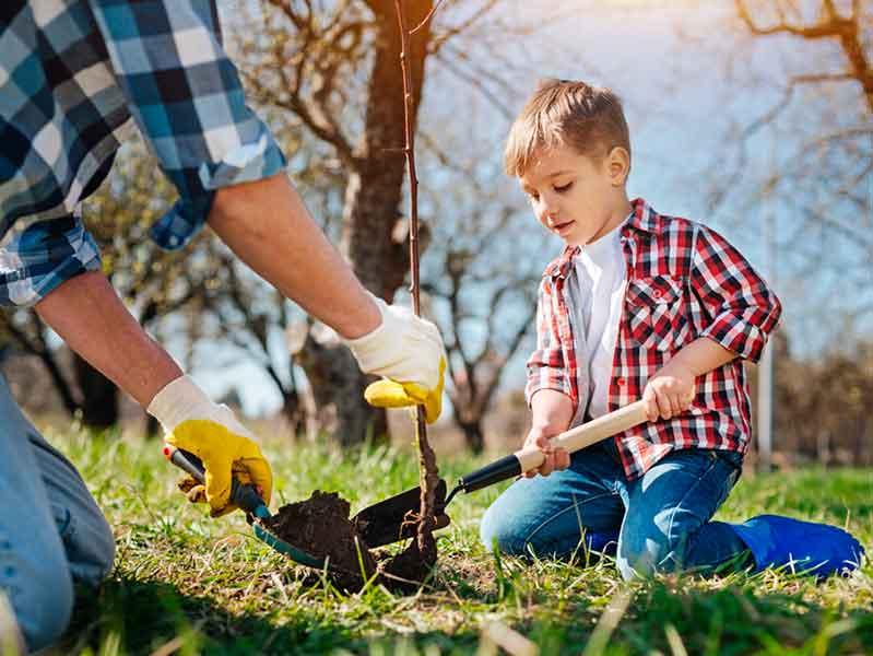 Весенние посадки деревьев и кустарников
