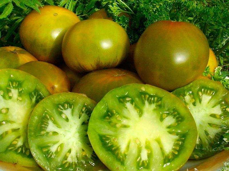 томат сорта болото
