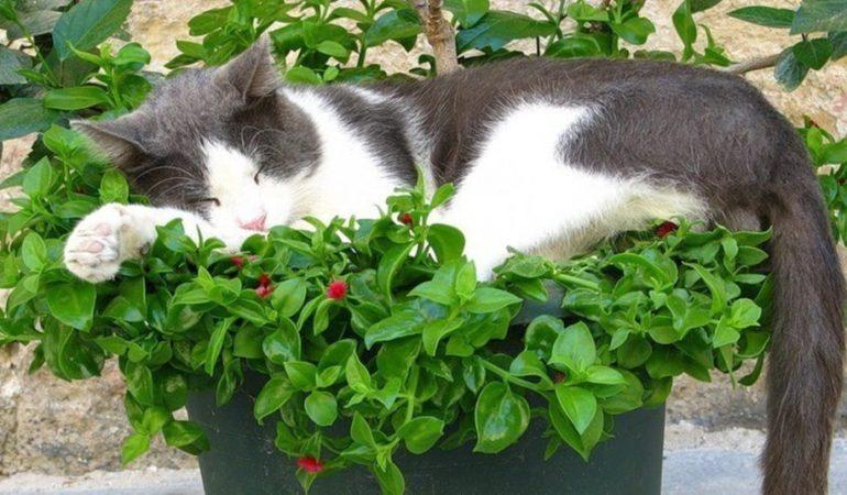 Какие комнатные растения приносят в дом счастье и благополучие