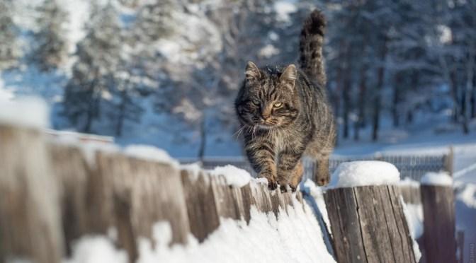 Ученые: Как изменились кошки за несколько столетий