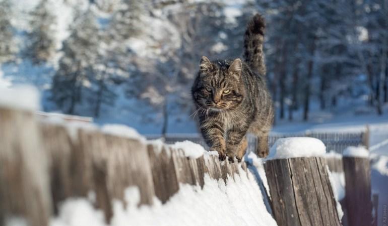 Как изменились кошки за несколько столетий