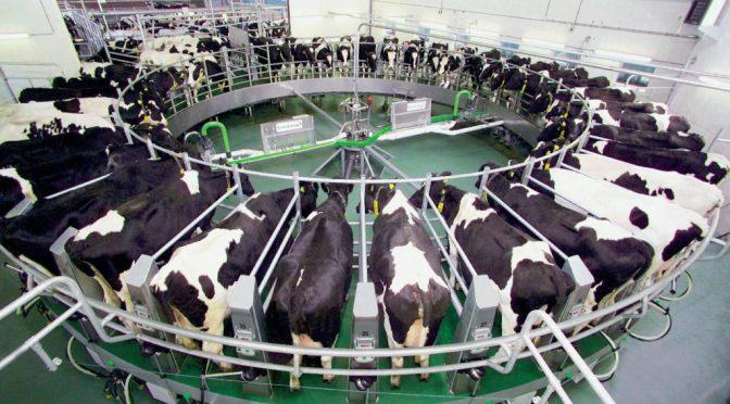 Власти Кировской области планируют создать около 5-ти молочных комплексов