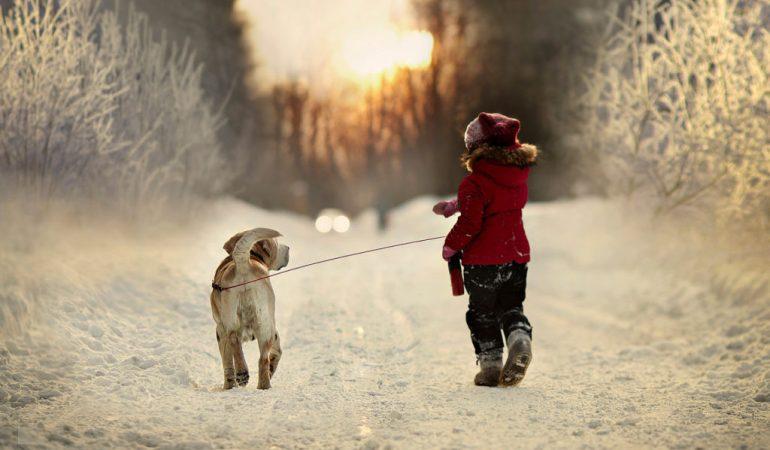 Список опасных собак, которых нельзя выгуливать без поводка