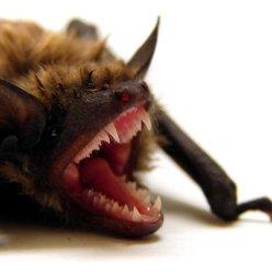 Какие животные пугают нас больше всего и чем вызваны эти страхи