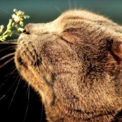 Какие запахи привлекают и отталкивают кошку