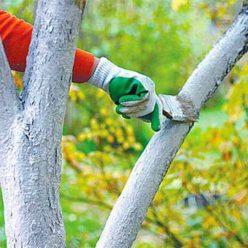 Зачем и как белить деревья осенью