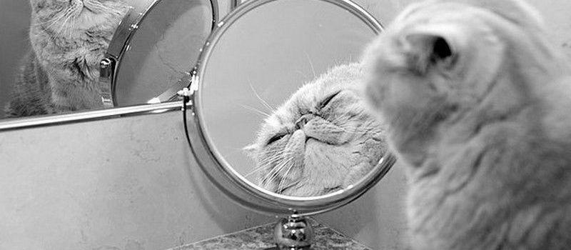 Зеркало видят ли в нём себя животные