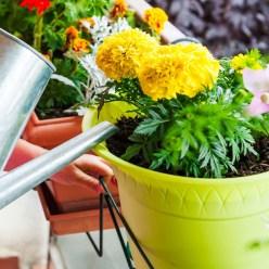 Рецепт полезного чая для комнатных растений
