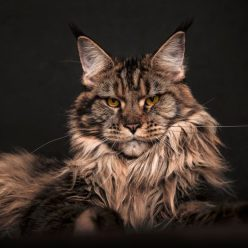 Как понять, какое настроение у кошки