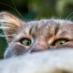 10 удивительных секретов, которые кошки скрывают от хозяев