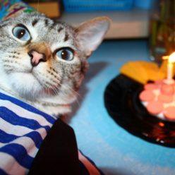 Сколько лет кошке в переводе на человеческие