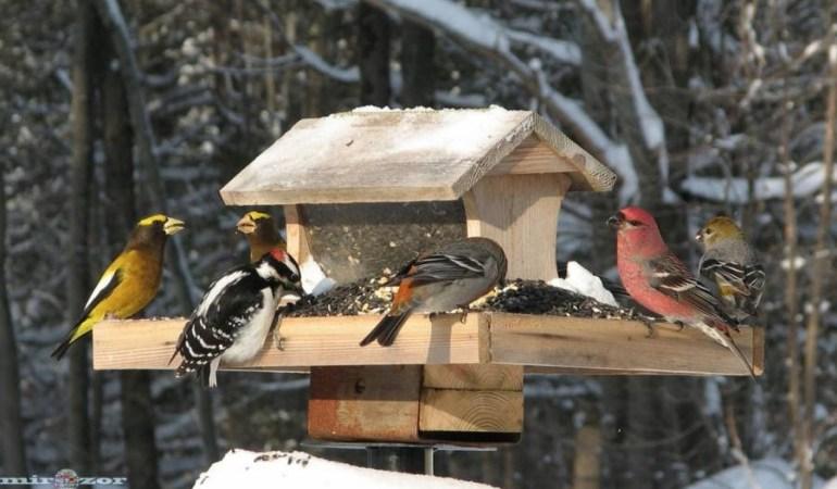 Как изменились птицы из-за глобального потепления
