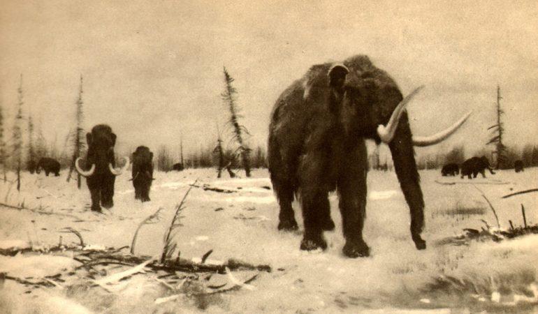 Учеными найдена причина вымирания последних мамонтов