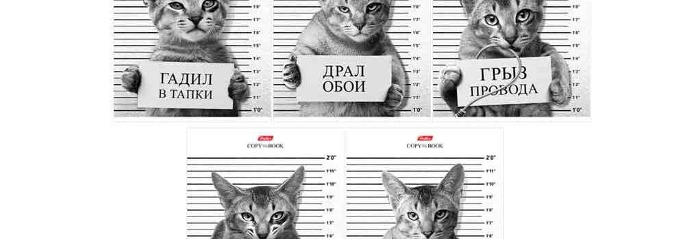 ТОП-10 самых нелепых законов о кошках