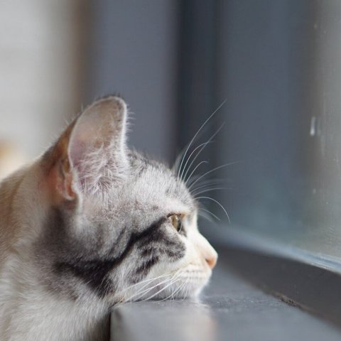 Как кошки предсказывают погоду