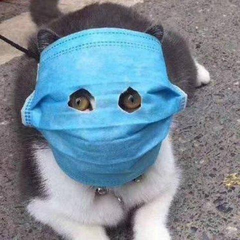 Вирусолог прокомментировал случай коронавируса у кошки