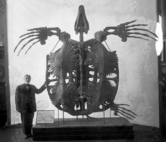 Архелон - вымершая гигантская морская черепаха